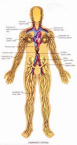 Лимфна система
