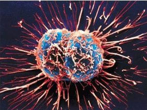 Делене на ракови клетки