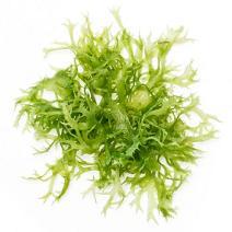 Морски водорасли