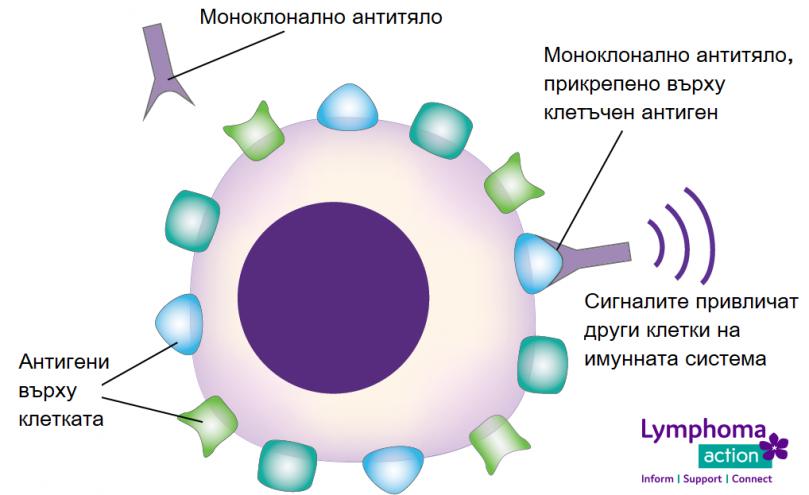 Терапия с антитела