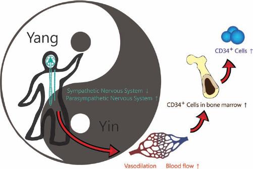 Tai Chi Chuan CD34+