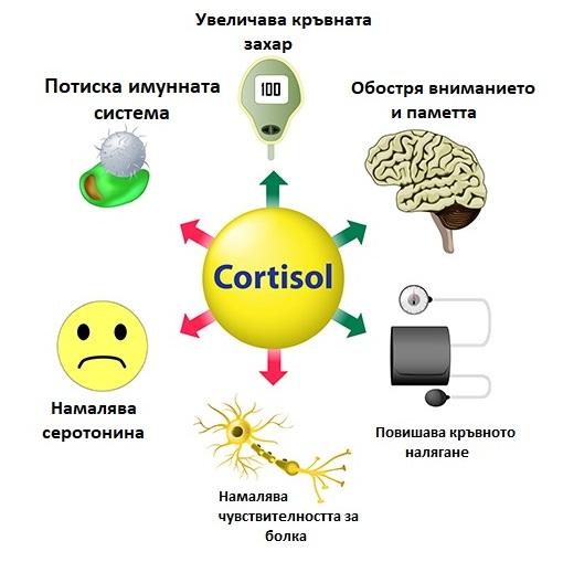 Кортизол и стрес